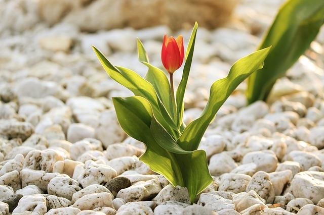 Bepflanzungspflicht und Schotterverbote